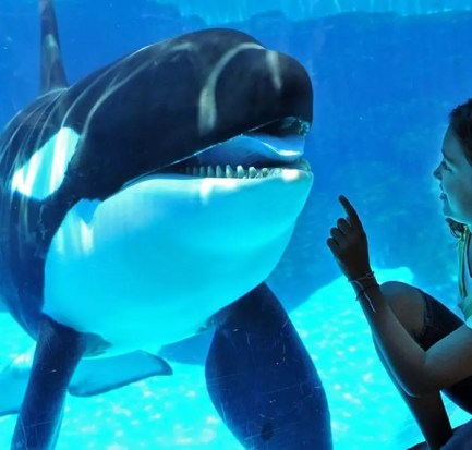 Sea World to End Killer Whale Show