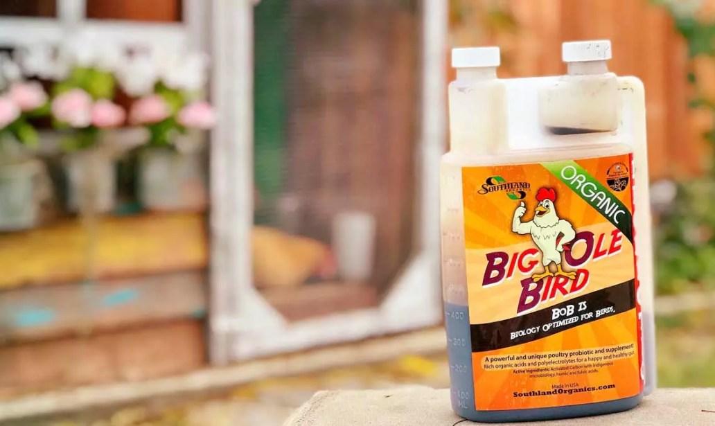 big ole' bird