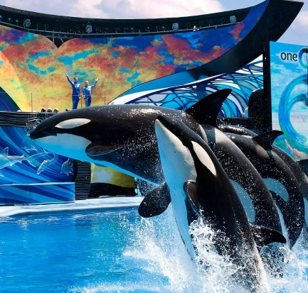 Joel Manby CEO Sea World Entertainment