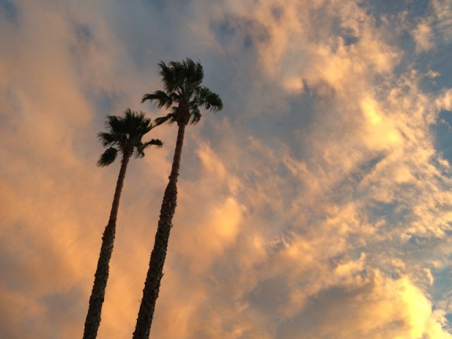 ca-palm-tree-sunset