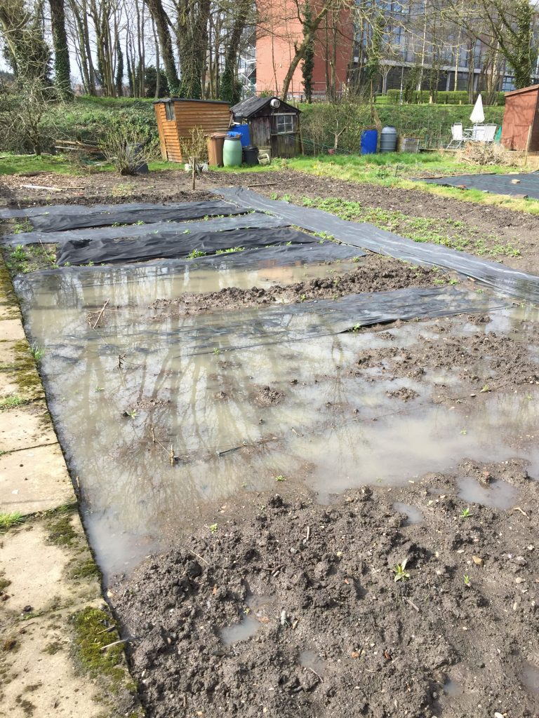 Our flooded allotment plot showing submerged beds and weed suppressant.