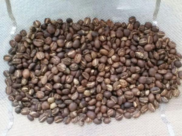 Rwanda Karenge Coffee Villages 2