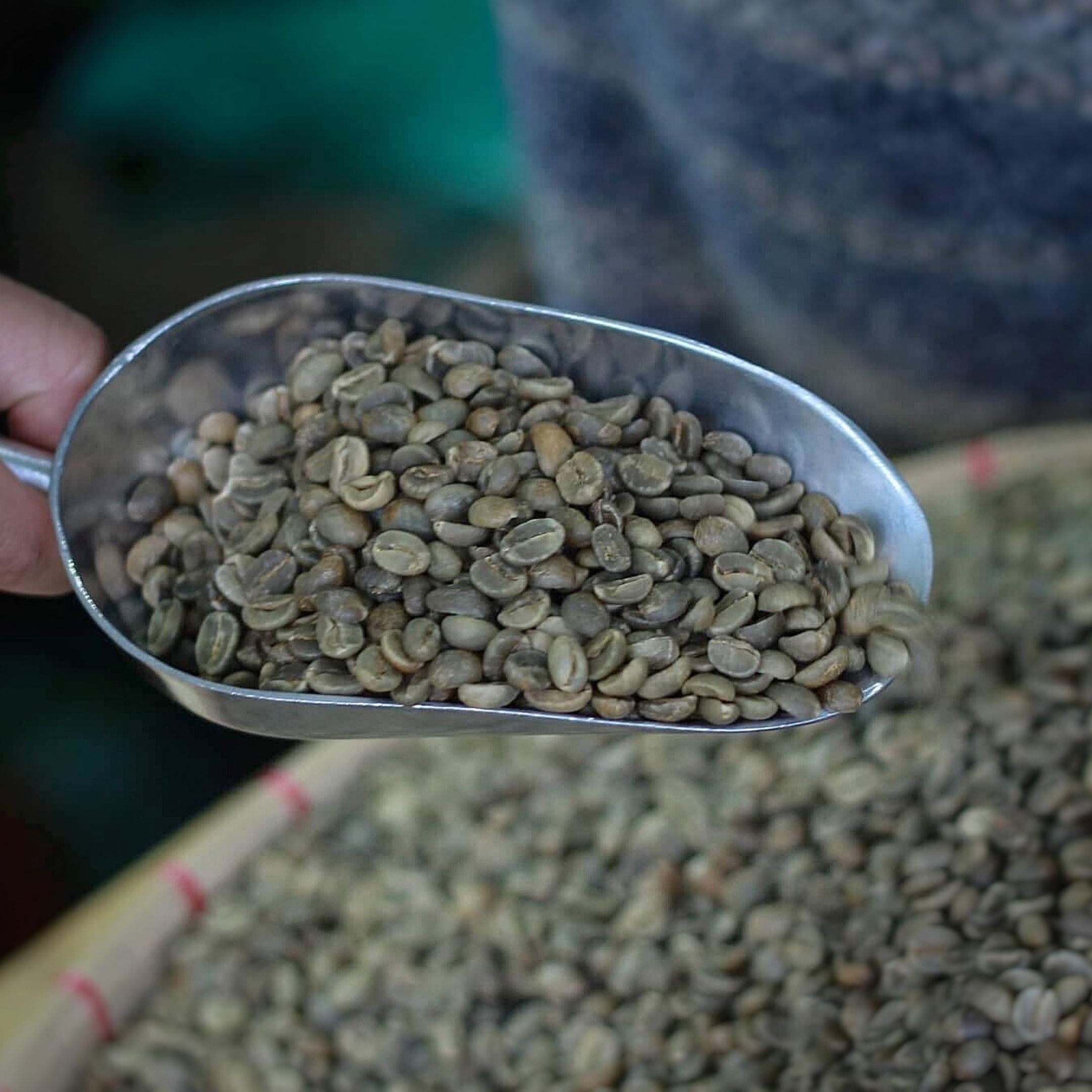 Green Coffee Beans Philippines Raw Coffee Beans
