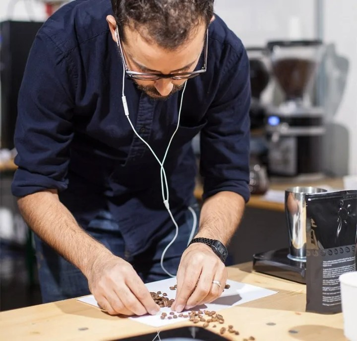 Kaffeemeisterschaft - Wissem Ben Rahim sortiert Bohnen aus