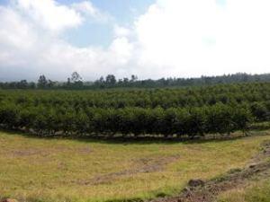 Malia Ohana farm