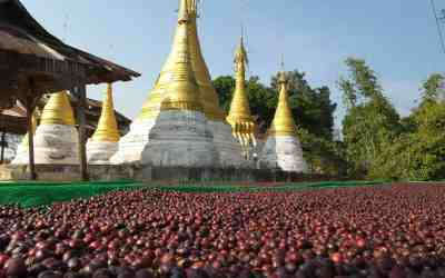First Myanmar coffees coming to SCAA in Atlanta