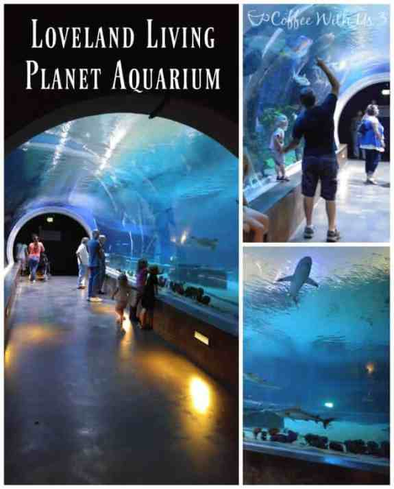 Loveland Living Planet Aquarium is a must-see if you're travelling to Salt Lake City!