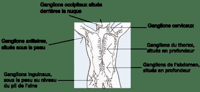 douleur poitrine et bras gauche