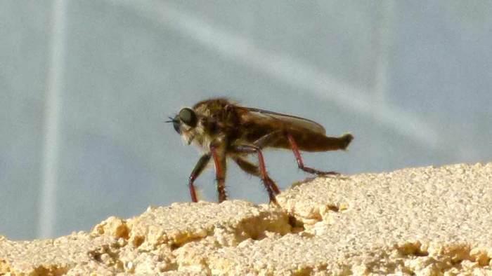 vue de la mouche