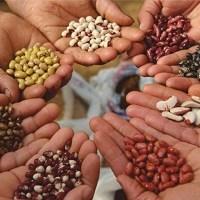 biodiversita-agraria-e-alimentare-in-italia