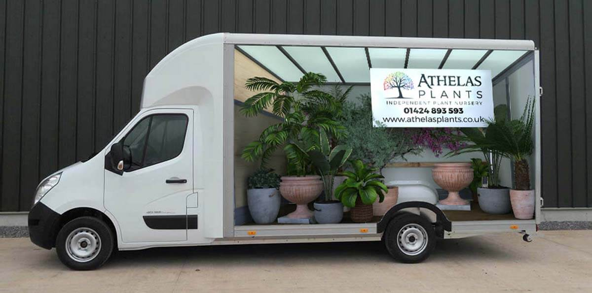 Athelas Plants Van 3D Wrap With Plants