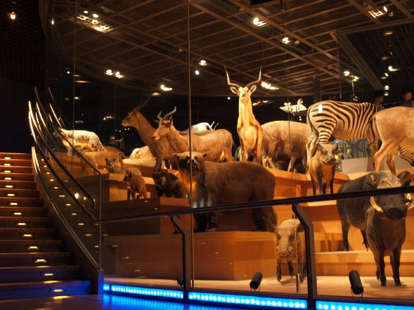 National Museum of Nature and Science2