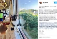cat-cafe-train
