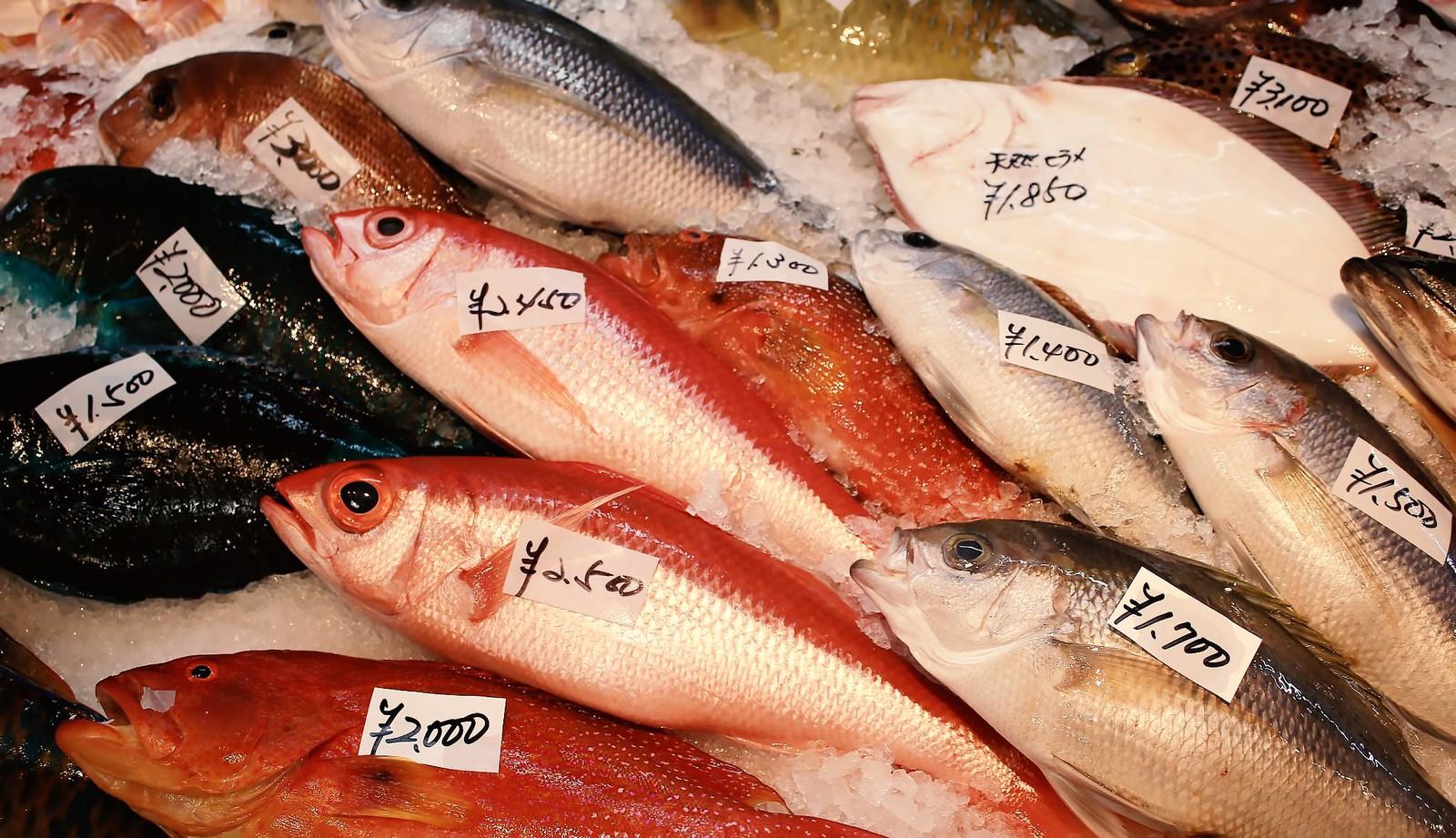 peixes preferidos