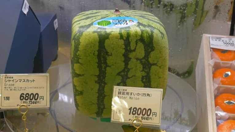 melão quadrado japonês