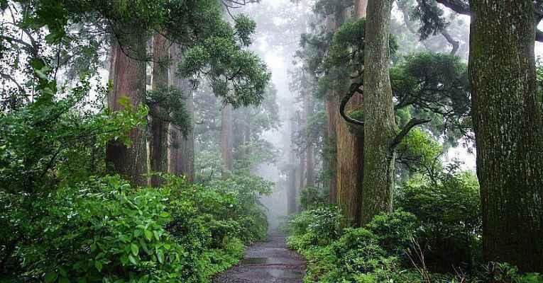 floresta em Hakone
