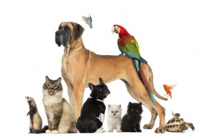 Blessing of the Pets - Cokesbury Church