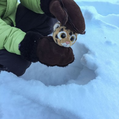 Jeggy was postholing because he didn't have snowshoes
