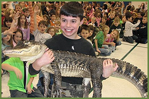 Lucky North American Alligator - Cold Blooded Creatures
