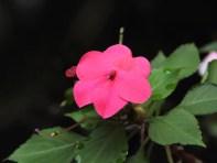 Flittiglise spiselige blomster