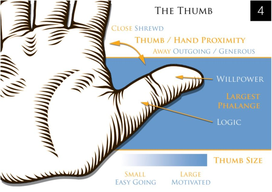 thumb palmistry meanings