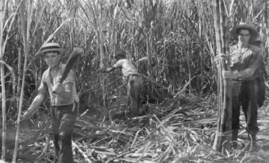 Cuba 10 Million Ton Sugar Harvest