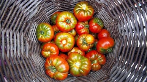 Tomates por Mr. Theklan