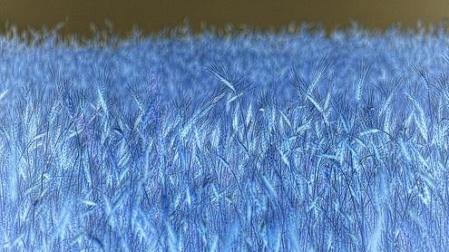 Campo de trigo invertido por jmribolhos54