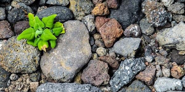 Verde entre piedras por Natalia Faraldos