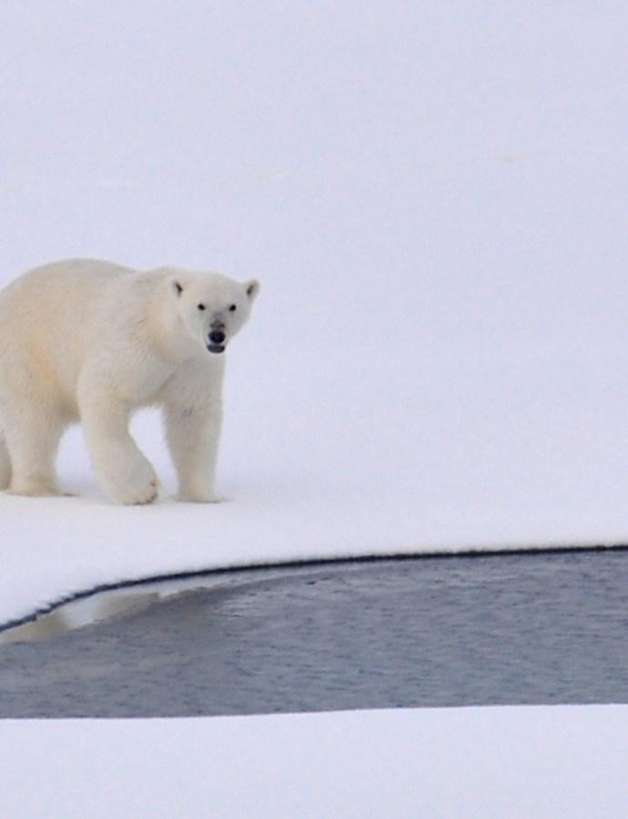 Join the UK Polar Network (UKPN)