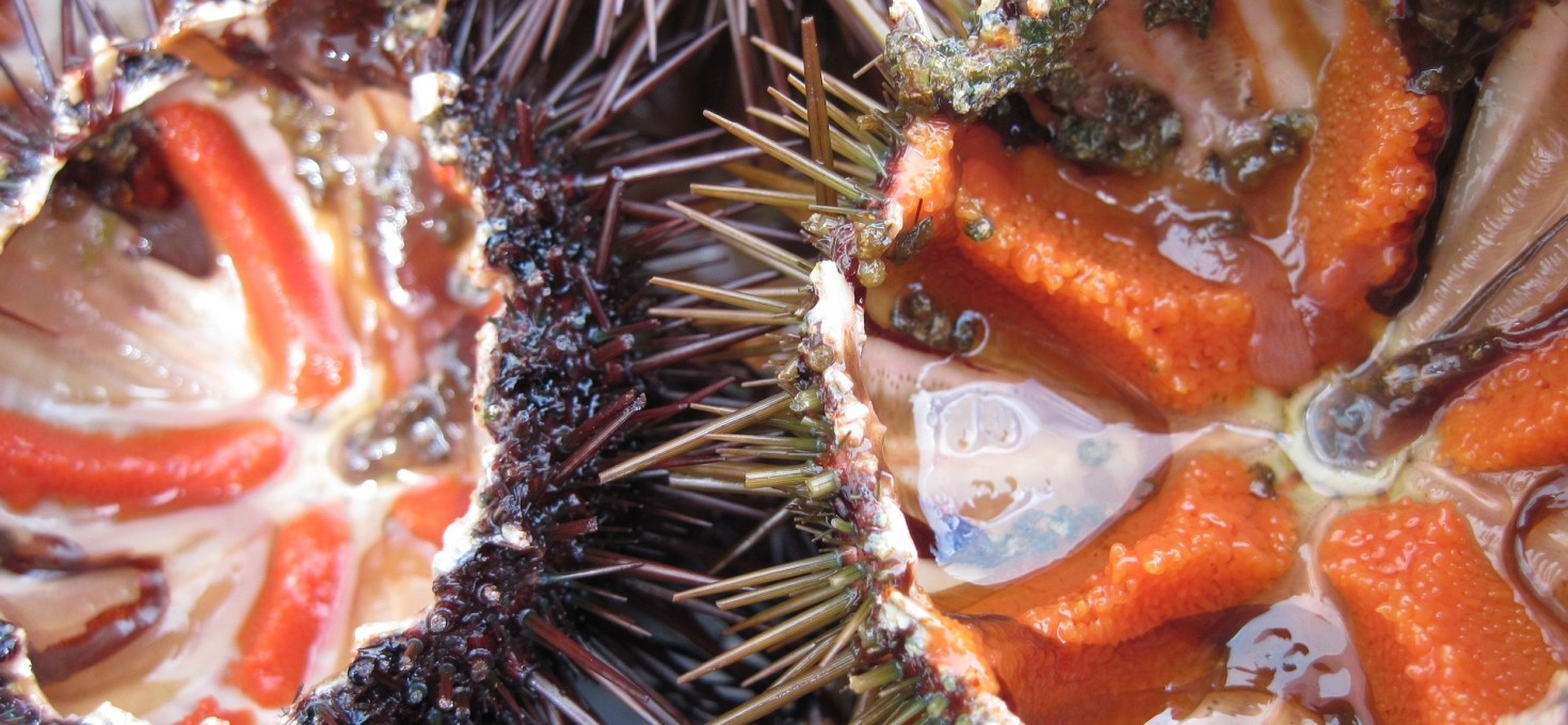 The effect of artificial diets on gonad colour and biomass in the edible sea urchin Psammechinus miliaris