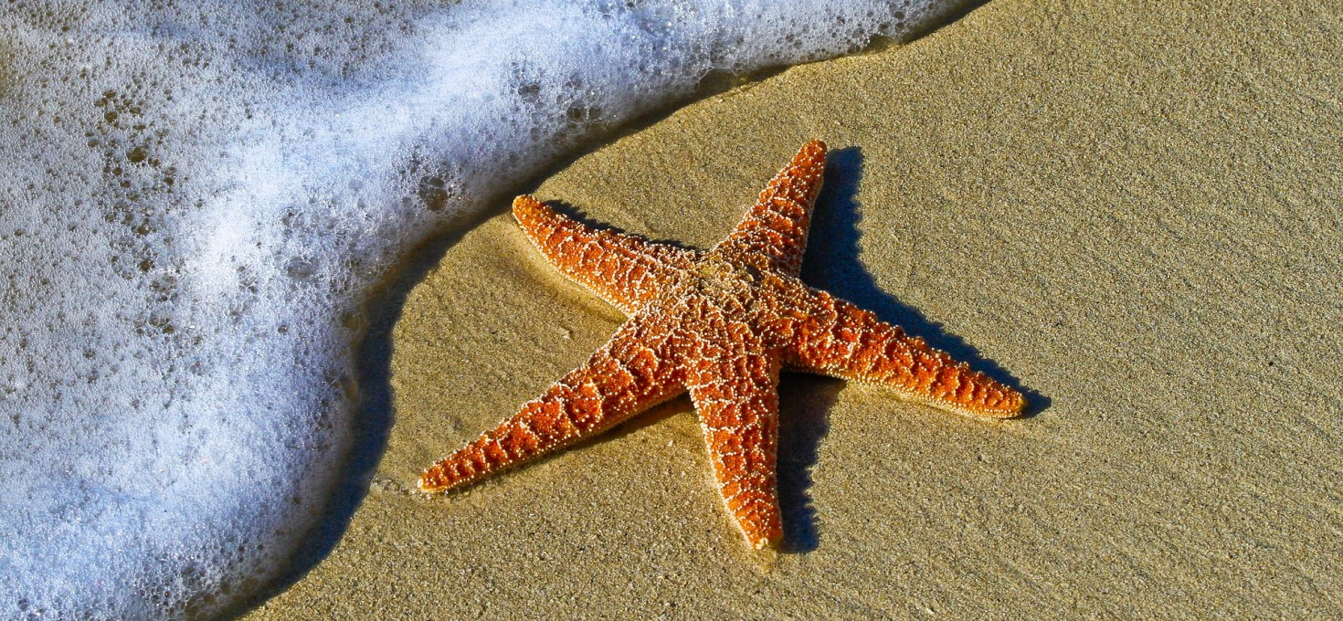 Starfish can glow in the dark…..see my new article in 'The Conversation'