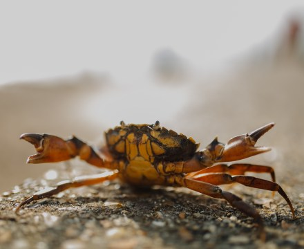 Edible crabs won't cope with future climate change – new study
