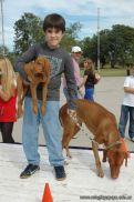 expo-mascotas-2009-146