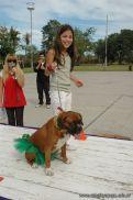 expo-mascotas-2009-154