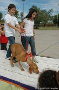 expo-mascotas-2009-182