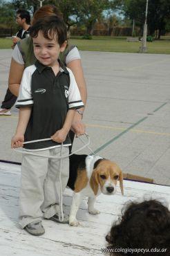 expo-mascotas-2009-187