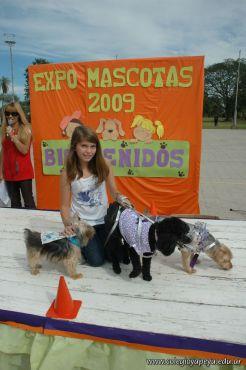 expo-mascotas-2009-217