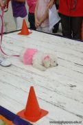 expo-mascotas-2009-239