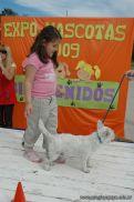 expo-mascotas-2009-247