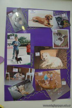 expo-mascotas-2009-330