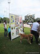 expo-mascotas-2009-40