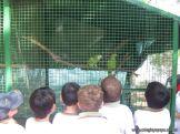 Visita al Zoologico 29