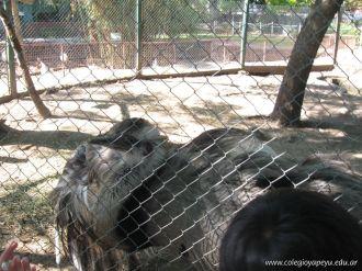 Visita al Zoologico 35