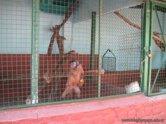 Visita al Zoologico 43