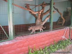 Visita al Zoologico 44