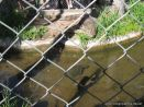 Visita al Zoologico 48