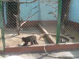 Visita al Zoologico 8