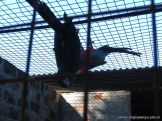 Corrientes Loro Park 67