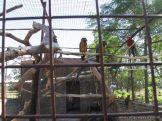 Corrientes Loro Park 89